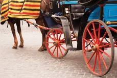 Sizin At Arabası Kullanma Ehliyetiniz Var mı?
